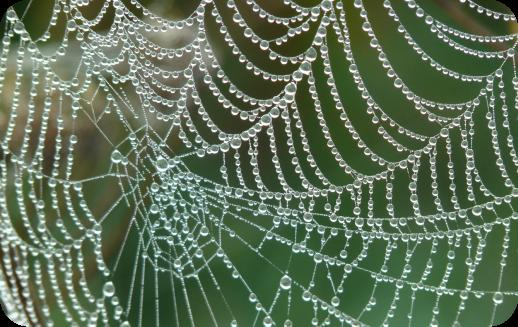 rete ragno